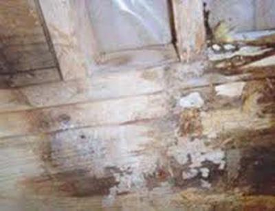 Bali Prefab World Durability Of Wood Pest Temites